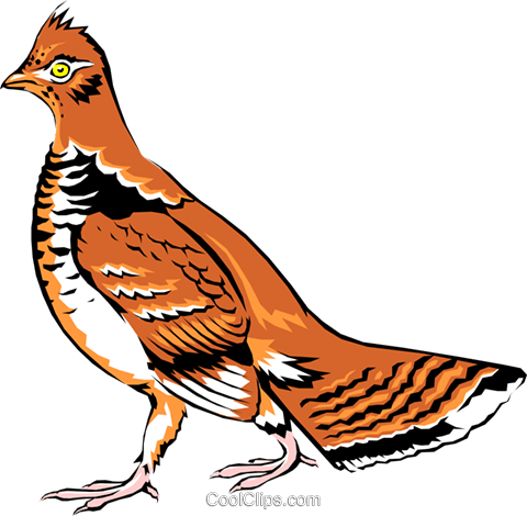 Ptarmigan Royalty Free Vector Clip Art illustration anim0092