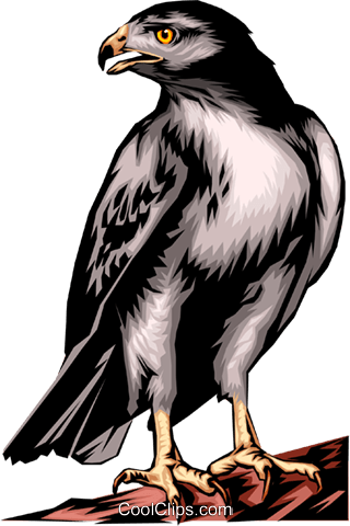 Red-tailed Hawk Royalty Free Vector Clip Art illustration anim0093