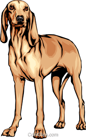 Italian hound Royalty Free Vector Clip Art illustration anim0099