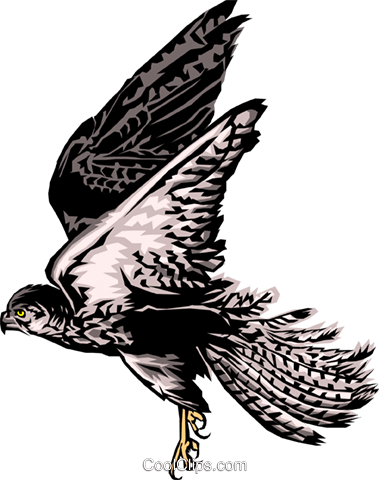 Hawk Royalty Free Vector Clip Art illustration anim0101