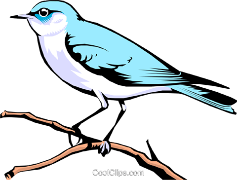 Mountain Bluebird Royalty Free Vector Clip Art illustration anim0107
