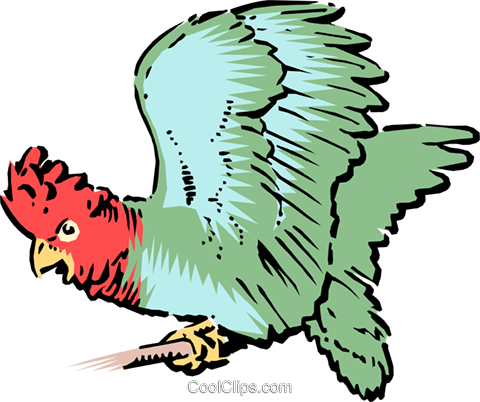 Parrot Royalty Free Vector Clip Art illustration anim0111