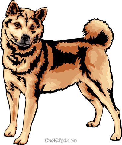 Shiba Inu Royalty Free Vector Clip Art illustration anim0123