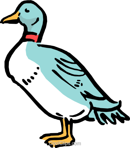 Cartoon duck Royalty Free Vector Clip Art illustration anim0531