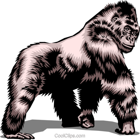 Gorilla Royalty Free Vector Clip Art illustration anim0469