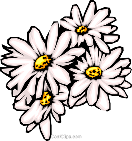 Daisies Royalty Free Vector Clip Art illustration natu0024