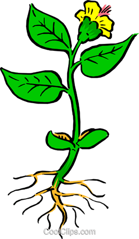 Plant with roots Royalty Free Vector Clip Art illustration natu0032