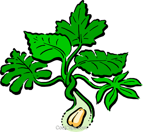 Peanut plant Royalty Free Vector Clip Art illustration natu0036