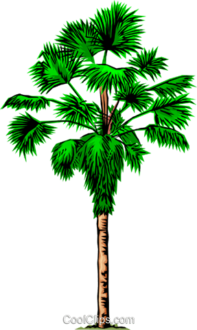Palm tree Royalty Free Vector Clip Art illustration natu0037