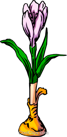 Crocus Royalty Free Vector Clip Art illustration natu0042