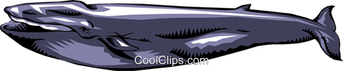 Whale Royalty Free Vector Clip Art illustration anim0191