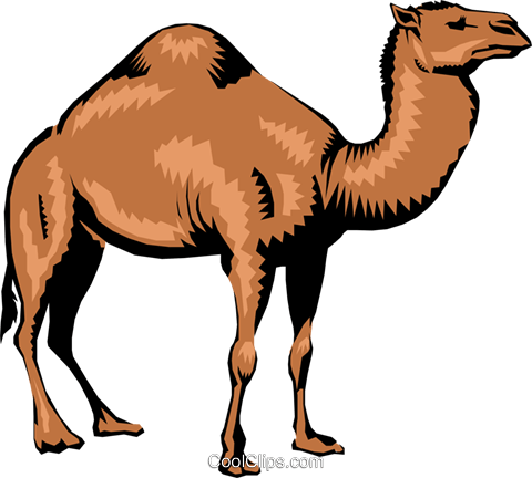 Camel Royalty Free Vector Clip Art illustration anim0195