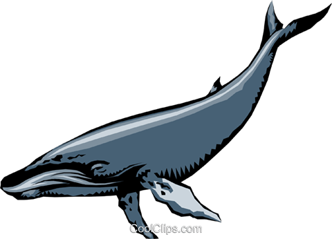 Humpback whales Royalty Free Vector Clip Art illustration anim0225