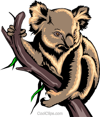Koala bear Royalty Free Vector Clip Art illustration anim0228
