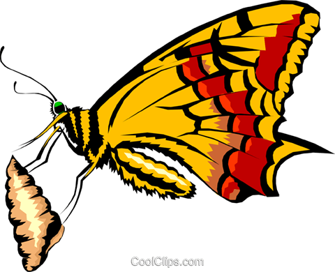Butterfly Royalty Free Vector Clip Art illustration anim0233