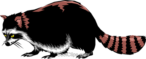 Raccoon Royalty Free Vector Clip Art illustration anim0245