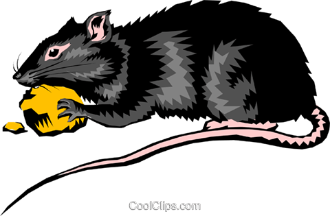 Rat Royalty Free Vector Clip Art illustration anim0246