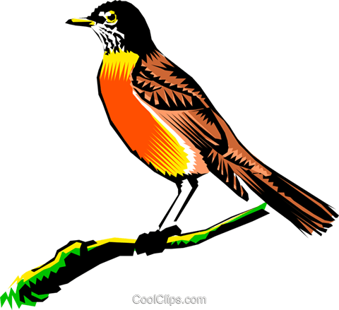 Robin on a branch Royalty Free Vector Clip Art illustration anim0249