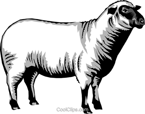 Sheep Royalty Free Vector Clip Art illustration anim0253