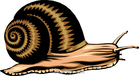 Snail Royalty Free Vector Clip Art illustration anim0255