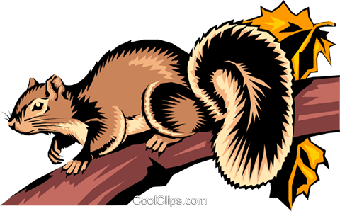 Squirrel Royalty Free Vector Clip Art illustration anim0257