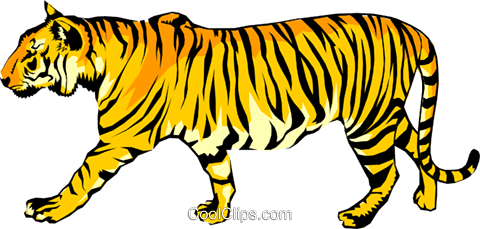 Tiger Royalty Free Vector Clip Art illustration anim0259