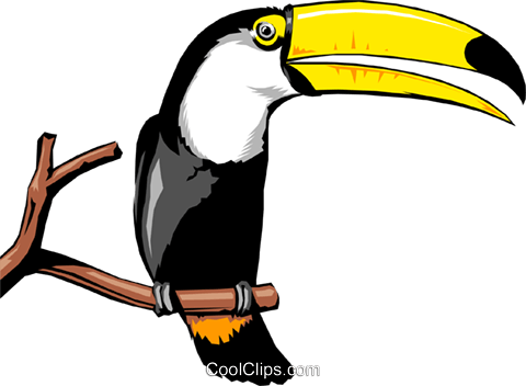 Toucan Royalty Free Vector Clip Art illustration anim0261
