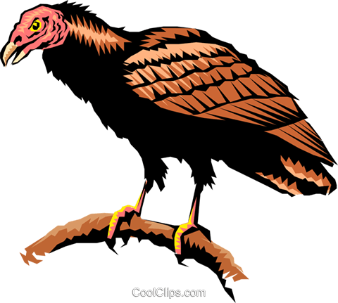 Turkey vulture Royalty Free Vector Clip Art illustration anim0266