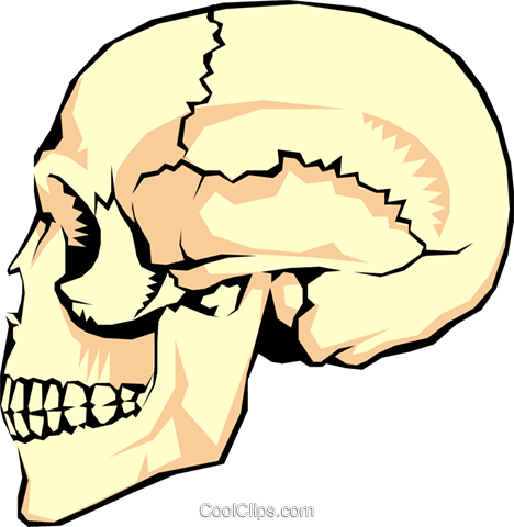 The human skull Royalty Free Vector Clip Art illustration medi0013