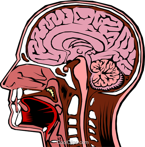 Human head cross section Royalty Free Vector Clip Art illustration medi0017