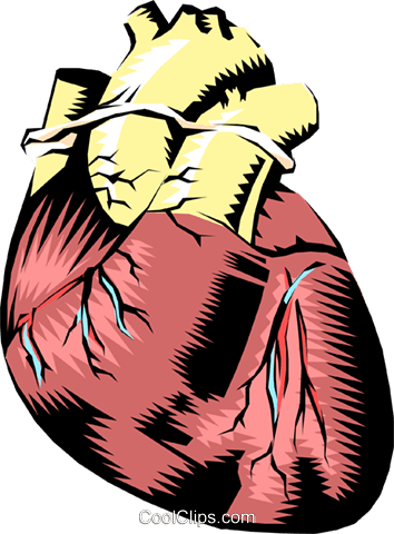 Human heart Royalty Free Vector Clip Art illustration medi0023