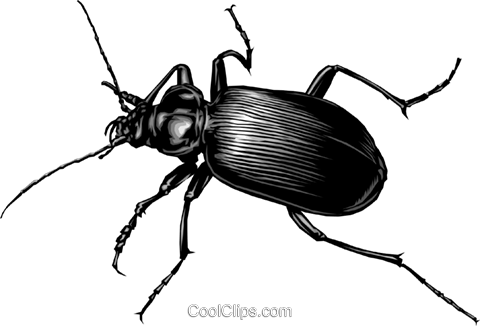 Beetle Royalty Free Vector Clip Art illustration anim0270