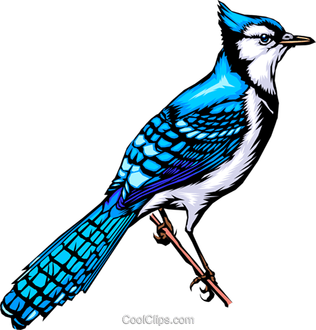Bluebird Royalty Free Vector Clip Art illustration anim0273