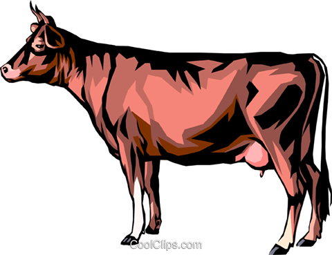 Cow Royalty Free Vector Clip Art illustration anim0274