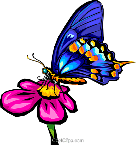 Butterfly Royalty Free Vector Clip Art illustration anim0275