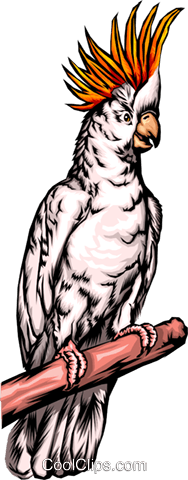 Cockatoo Royalty Free Vector Clip Art illustration anim0276
