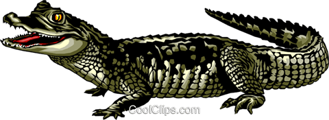 Caiman Royalty Free Vector Clip Art illustration anim0278