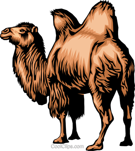 Dromedary Royalty Free Vector Clip Art illustration anim0279