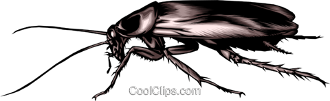 Cockroach Royalty Free Vector Clip Art illustration anim0288
