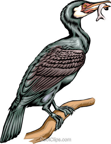 Cormorant Royalty Free Vector Clip Art illustration anim0289