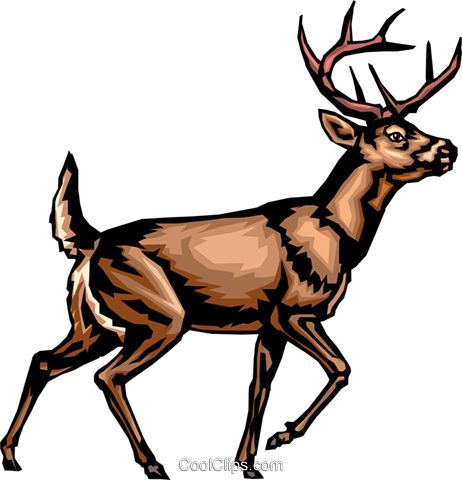 White-tailed deer Royalty Free Vector Clip Art illustration anim0292