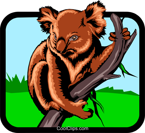 Koala Bears Royalty Free Vector Clip Art illustration anim0568