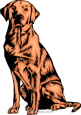 Labrador retriever Royalty Free Vector Clip Art illustration anim0309