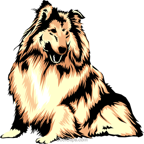 Collie Royalty Free Vector Clip Art illustration anim0313
