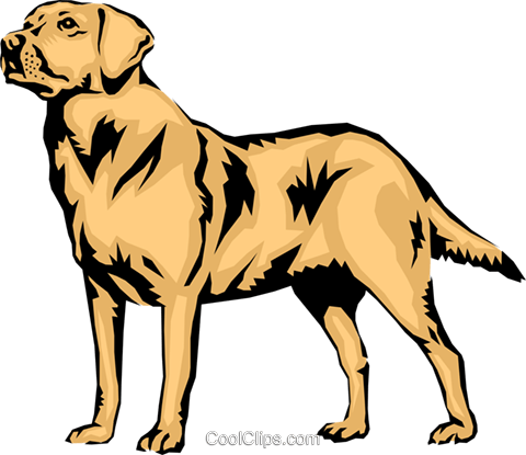Labrador retriever Royalty Free Vector Clip Art illustration anim0314