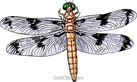 Dragonfly Royalty Free Vector Clip Art illustration anim0319