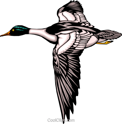 Duck Royalty Free Vector Clip Art illustration anim0320