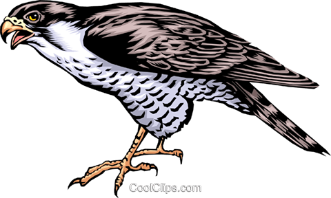 Falcon Royalty Free Vector Clip Art illustration anim0323