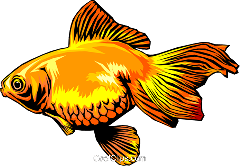 Goldfish Royalty Free Vector Clip Art illustration anim0325