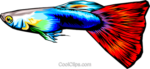 Tropical fish Royalty Free Vector Clip Art illustration anim0331